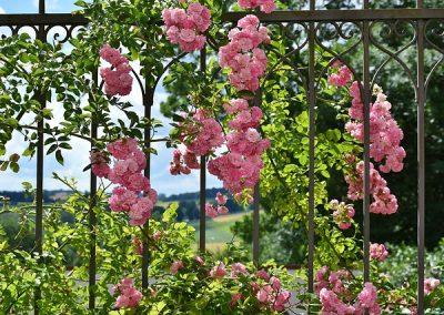 Vrtnica, simbol Anglije